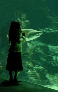 little girl and shark